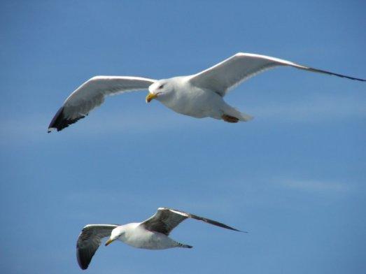 ce057-seagulls7