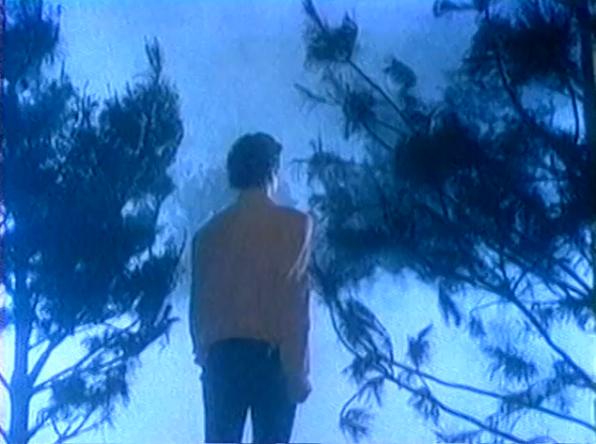 spiros trees